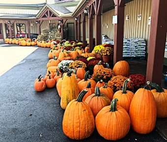 LOCAL apples, pumpkins, squash and gourds! Decorative corn stalks and Mums!  All at Glenburnie Grocery!