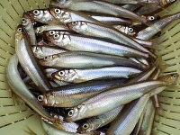 For all those who love to FISH - Frozen freshwater lake smelts now available at Glenburnie Grocery, $6.99 for a 2lb bag!