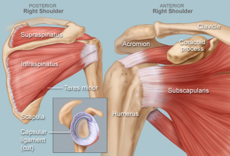 Recovery After Shoulder Injury ... Mistakes to Avoid - Blog | Nepean ...