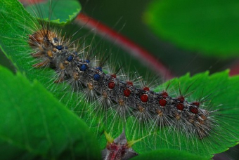 Gypsy Moth Spraying At Hillcrest Park in Pelham May 15
