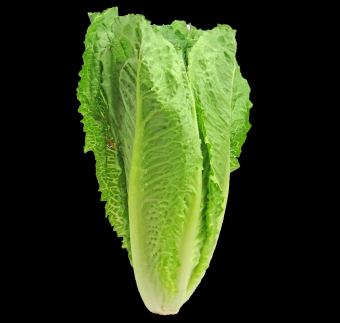 CHUCK IT: e.Coli OUTBREAK Linked to Romaine Lettuce
