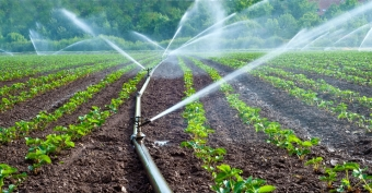 Our Irrigation Methods and Water Supply