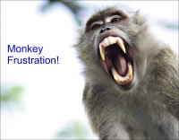 Stop Monkey-ing Around with Your Marketing