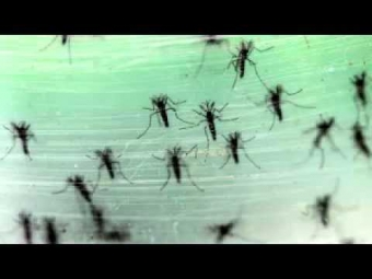 The Medical Station Explores What We Know About Zika Virus