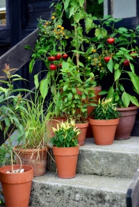Can I Grow Vegetables in Containers?