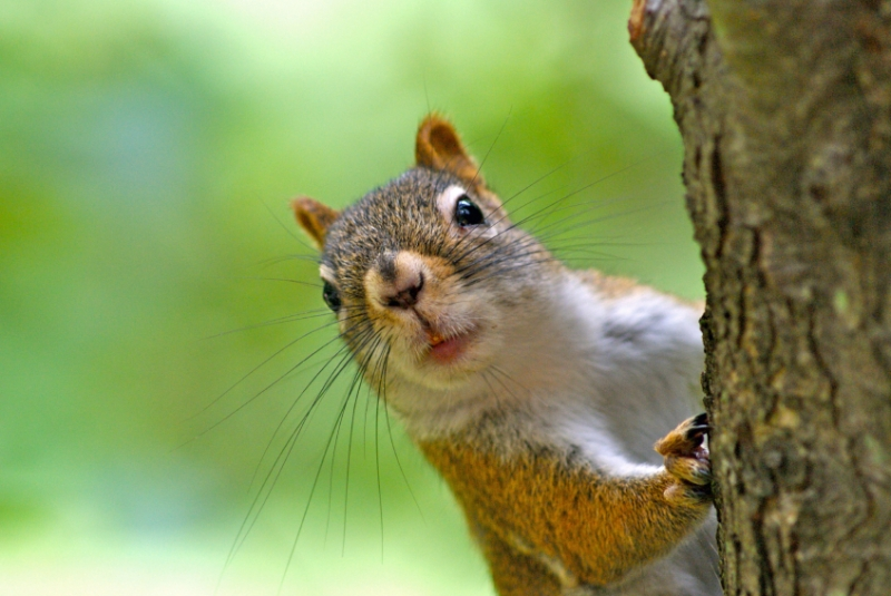 Keeping squirrels away from your bulbs country basket - How to keep squirrels away from garden ...