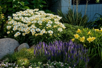Planting Beautiful Perennial Beds