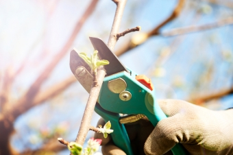 How, Why & When to Prune Shrubs