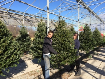 Reserve your Christmas tree!