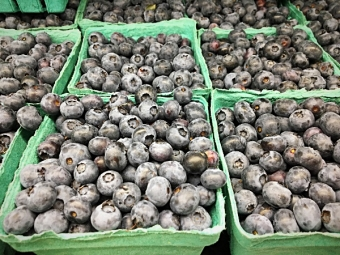 Fresh local blueberries from Hughes Orchard still available at Glenburnie Grocery!