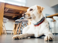 Getting a New Pet? Prep your home