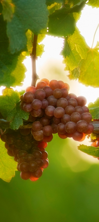 What's in store with the 2015 Harvest in Niagara's Twenty Valley?