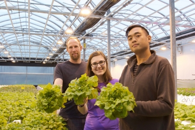 Greenhouse turns over new leaf with Niagara Lettuce Co.