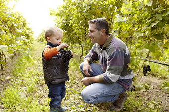 Getting to know grape growers: Trevor Falk