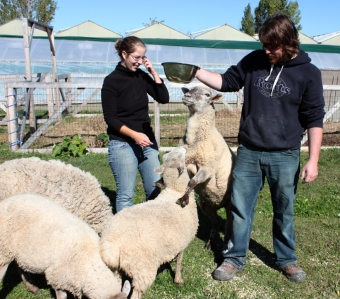 NiAGara: Farm Heroes and Agvocates — Creek Shore Farms