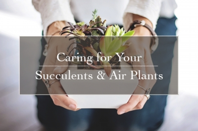 Caring for Your Succulents & Air Plants | Gemmell's Garden Centre
