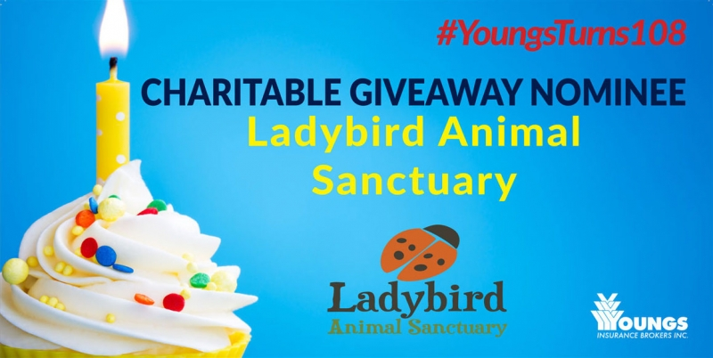 Youngs' 108th Birthday Charitable Nominee | Ladybird Animal Sanctuary