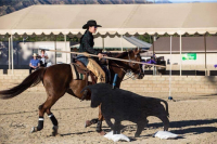 Have You Heard About Working Equitation?