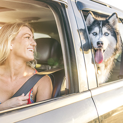 3 Important Facts You Should Know About Taking Your Pet For A Ride