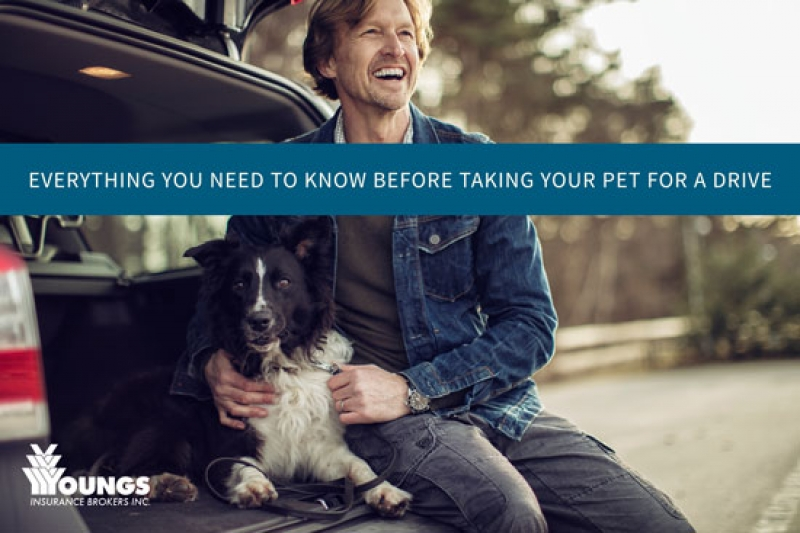 Everything You Need To Know Before Taking Your Pet for a Drive