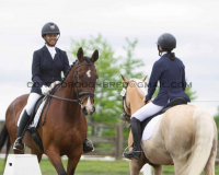 New shows for Dressage Niagara