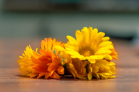 Calendula: For sensitive skin, cooking and seducing the one you desire...