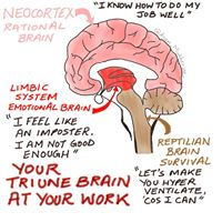 The Brain at Work