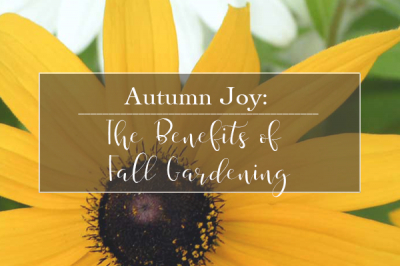 Autumn Joy: The Benefits of Fall Gardening | Gemmell's Garden Centre