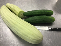 The Armenian Cucumber
