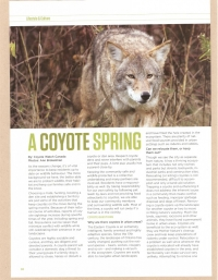 Spring Has Sprung! Coyote Connections