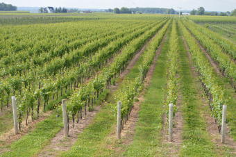 Terroir Analysis of the Nova Scotia Wine Growing Region 2017