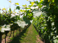 February 2018 Canadian Grapevine Sector Workshop