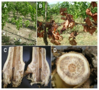 Grapevine Trunk Disease in British Columbia: From Identification to Control