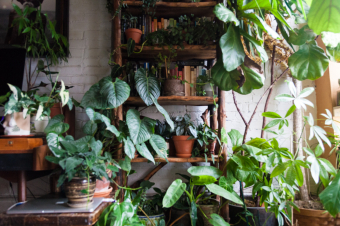 Create your own Indoor Jungle