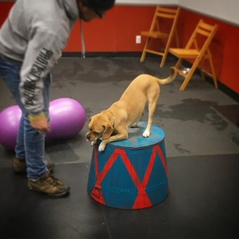 Guelph's only Canine Circus Classes!