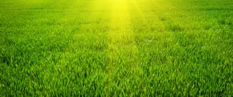 Your Guide to Greener Grass Year Round