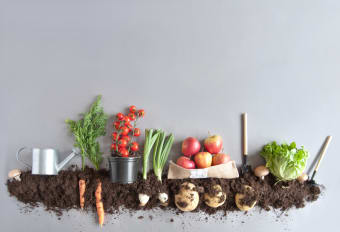 Edible Landscaping: Creating a Garden That Looks Good Enough to Eat