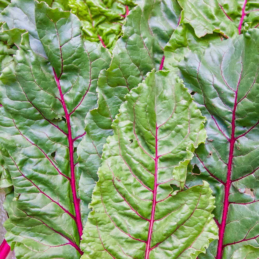 16 Ways To Eat Swiss Chard Grub By Eating Niagara Food And Travel Blog Timeforgrub Com