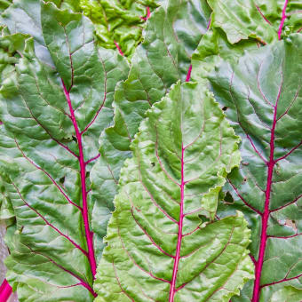 16 Ways to Eat Swiss Chard