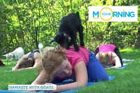 Lindsey Does Goat Yoga on CTV's Your Morning Show