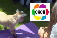 Mother's Day Goat Yoga on CHCH TV