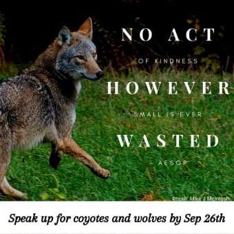 Take Action To Stop Ontario's War on Canids