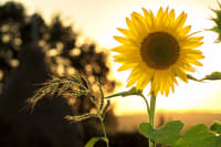 Sunlight Garden: Is Your Garden Getting Enough Sunlight?