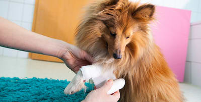 Heavy Bleeding in a Dog or Cat that Won't Stop
