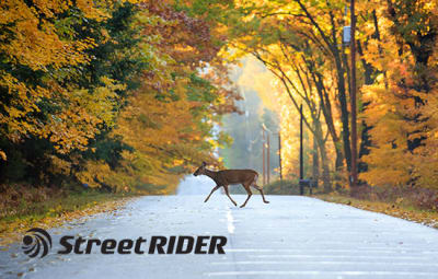 You Can't Live Without Our Deer Season Motorcycle Safety Tips!