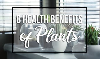 Much More than a Pretty Face: 8 Health Benefits of Plants | Gemmell's Garden Centre
