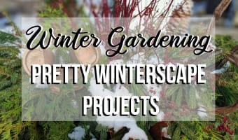 Winter Gardening | Pretty Winterscape Projects | Ottawa Valley