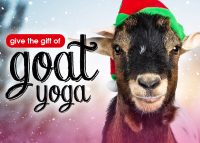 Give the Gift of Goat Yoga