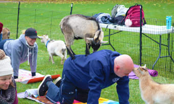 Goat yoga: a chance to say 'nnnnaammastte'