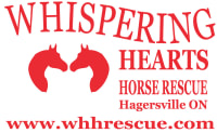 Ian Millar Visits Whispering Hearts Horse Rescue Centre